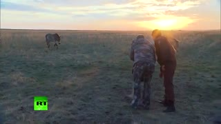 Putin Visits Reserve For Wild Horses And Sets 6 Of Them Free! - Video