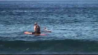 Surfer battles it out with remote controlled surfer - Video