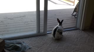 Wild rabbits want to come in! - Video