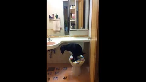 Smart dog knows how to use the toilet!