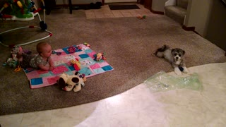 Baby can't stop laughing at puppy playing
