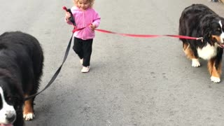 Tiny toddler expertly walks two huge dogs - Video
