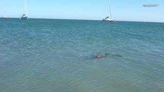 Living in freedom: Monkey Mia Dolphin Experience, Western Australia - Video