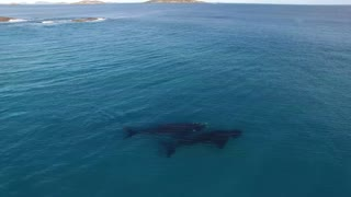 Paddle Boarding with Whales In Esperance Australia
