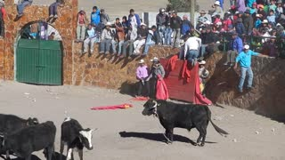 Bull Escapes Causing Chaos in Crowded Procession - Video