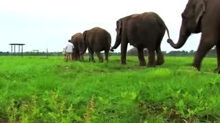 Scientists probe elephant genes for cancer clues - Video