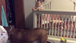 Dog Protects Baby From 'Angry' Mother During Training - Video