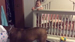 Dog protects baby from