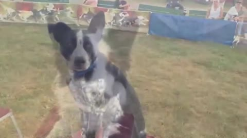 Dogs perform unbelievable tricks