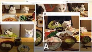 Cats Watch Owners Eat Food, Internet Loves It - Video