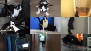 Graciosos videos musicales creados desde sonidos de gatos al azar - Video