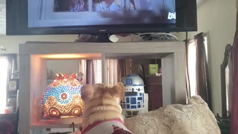 Dog mourns with family as they burry their cat on TV show
