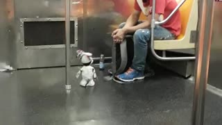 Man in red with robot dog on train