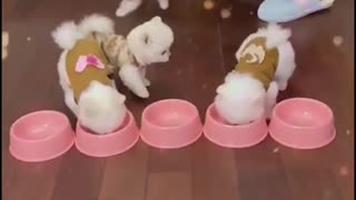 Cute puppies and funny