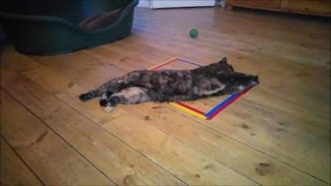 PURR-iceless, CLAW-some Feline Fun in a Taped Square