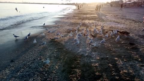 Calming surf of the sea and seagulls at sunset