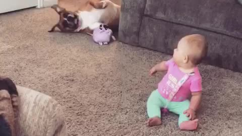 Boxer getting her toy to the baby
