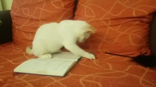 My Cat Playing with My Diary.