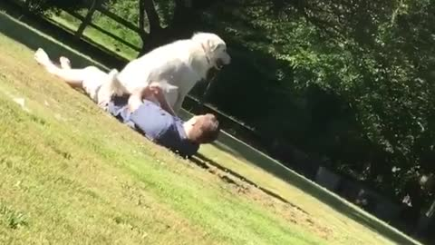 Large dog takes a seat