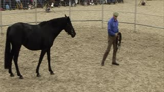 Saddling a Horse for the First Time in Under Thirty Minutes - Video