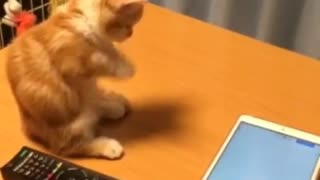 Kitten attempts to play with tablet, fails adorably - Video