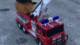 Fire fighting guineapig - Video