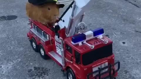 Fire fighting guineapig