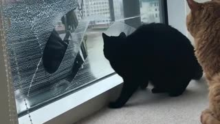 my 2 cats looking at the glass washing guy with strange way
