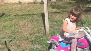 Little girl invents hilarious way to play with foster dogs  - Video