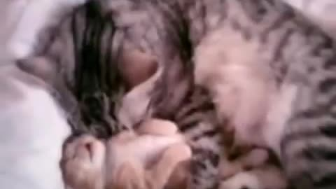 Mama cat sees her baby is having a bad dream! NOW WATCH WHAT SHE CONSOLES HIM !