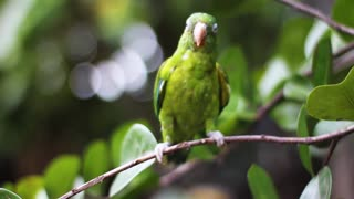 Beautiful green parrot