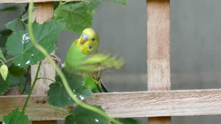 Funny green Bird catches leaf with mouse