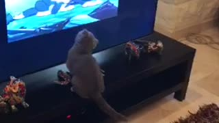 Cat Wants To Help Catch Jerry
