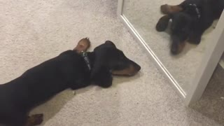 Curious Puppy Has Adorable Encounter With His Mirror Reflection