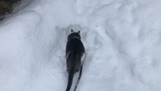 Wonder the cat checking out fresh snow