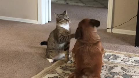 Heartwarming playtime between dog and cat