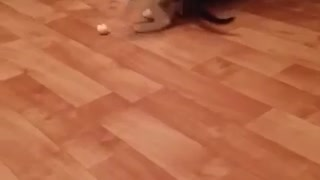 Kitty play with ball - Video