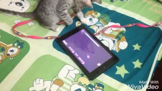 cat play game! - Video
