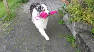 Old Dog Dances With Umbrella - Video