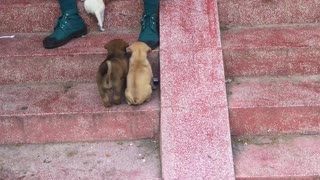 Puppy Slide - Video