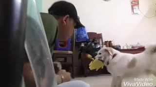 boxing practice with punching dog