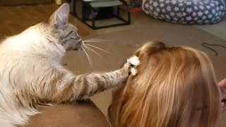 Cat Helps Comb Hair