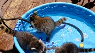 Pool Party for Animal Pals