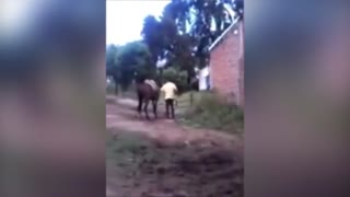 (VIDEO) Exhausted Horse Beaten With Whip By Cruel Horse Trainer! - Video