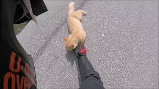 Motorcyclist Rescues Kitty on Road