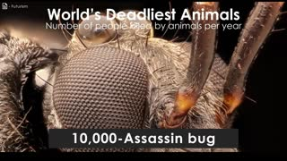 What is the Deadliest Creature in the World? - Video