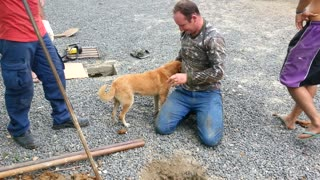 Workers Rescue A Dog Stuck In Drain Pipe
