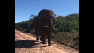 Elephant Walk Next tous During our walk by car without fear
