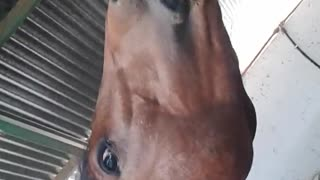 Friendly horse smiles for the camera