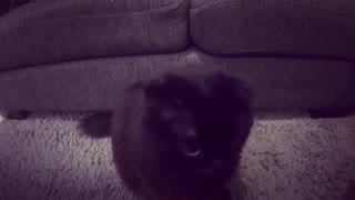 Cute Cat Playing with Camera - Video